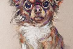 1_2019-Hund-1